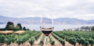Avec souches de raisin une plus grande échelle de usine de vin