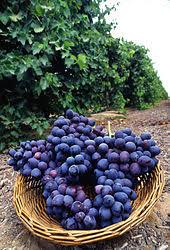 Lorsque les sédiments viticulture oenologie formation se déposent au fond