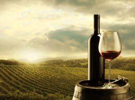 Schéma vignoble de la technologie de production de vin