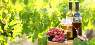 Sélection des raisins production de vin