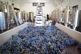 Lors de la fabrication de vin vignoble