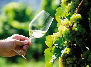 Stocké plus longtemps Sante production de vin perd de la valeur